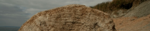 Log on beach