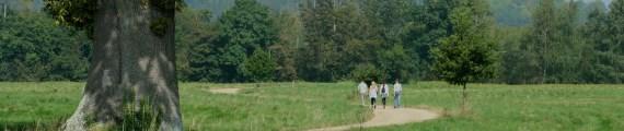 Group walking away
